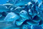 fish-identity